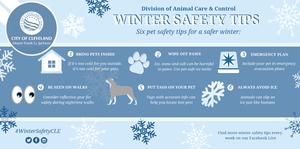 Winter Safety Series (PETS) (3).png